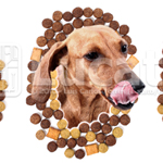 iStockphoto Rejeitada - Isolamento: Deliciosa ração para cachorro | Rejected iStockphoto - Isolation: Delicious dog food