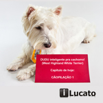 Dudu inteligente pra cachorro - CÃOPILAÇÃO 1 - West Highland White Terrier |Dudu smart dog - West Highland White Terrier - Compilation 1